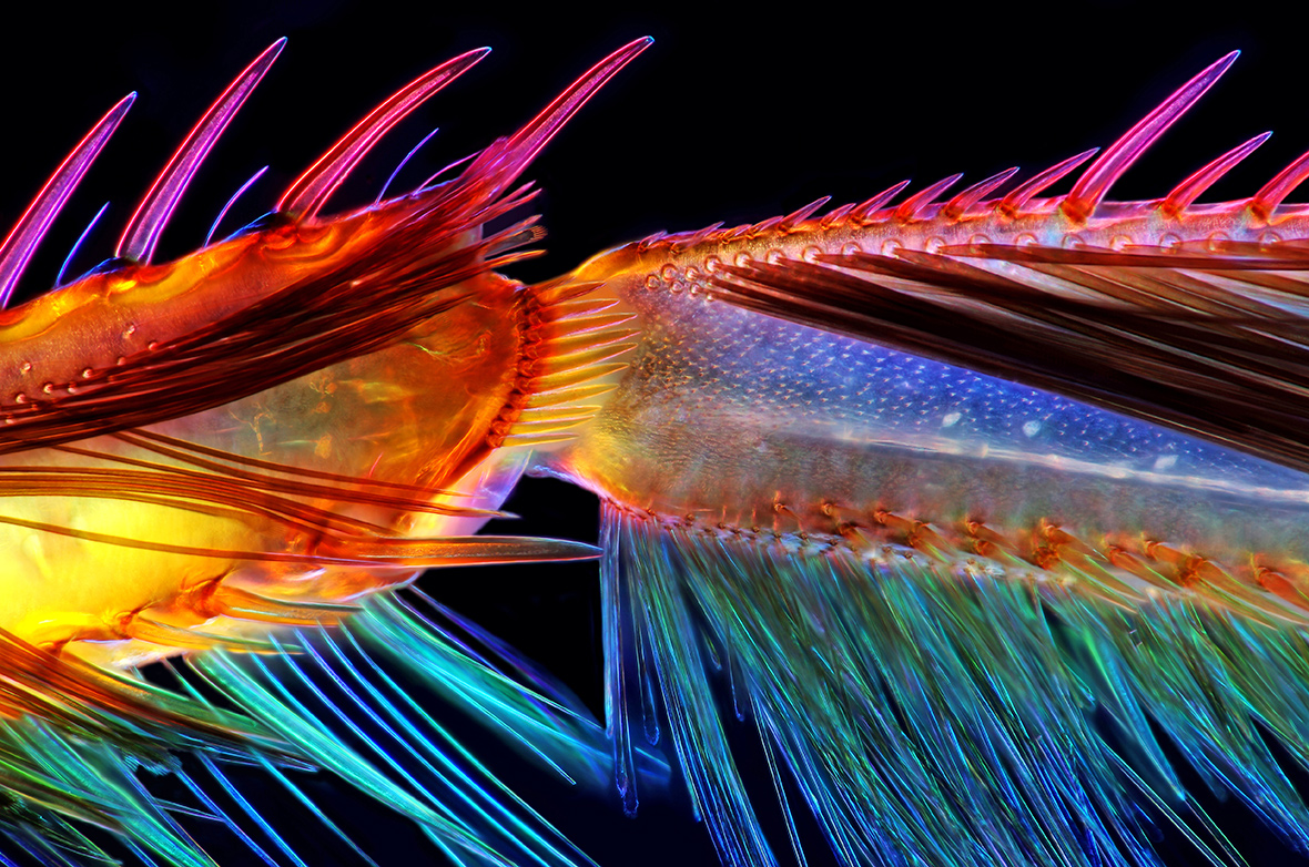 2016 Nikon Small World Finalists