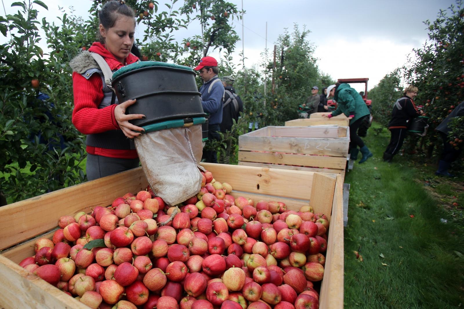 British fruit pickers