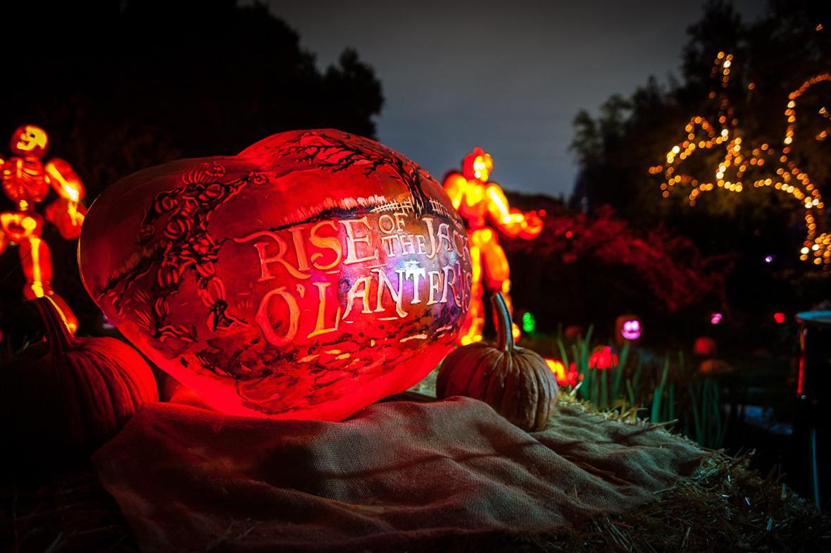 The Rise of the Jack O'Lanterns