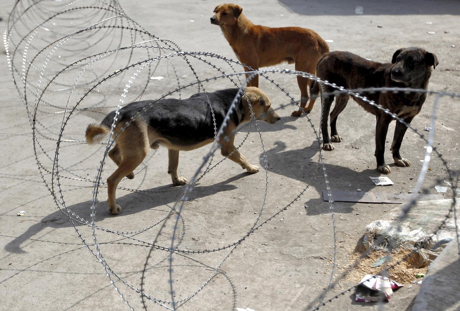 India Hyderabad dog rape