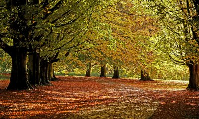 Autumn colour Britain UK