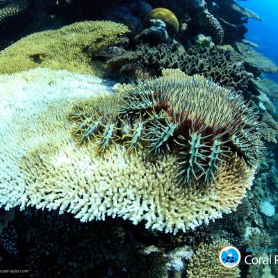 coral bleaching great barrier reef