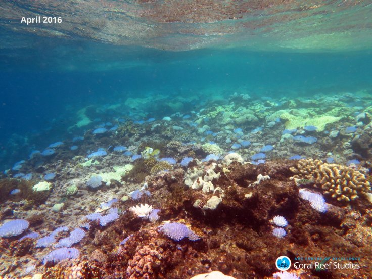 coral bleaching great barrier reef