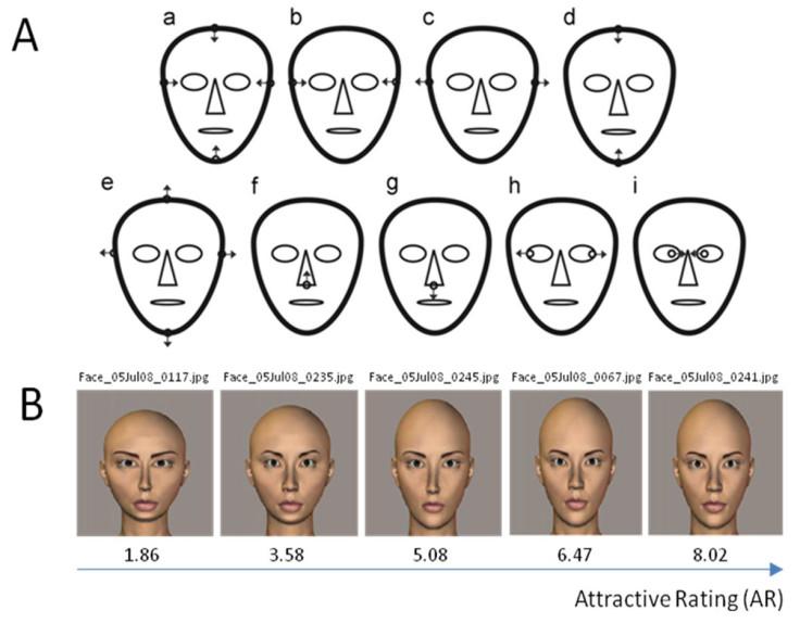 Attractive and unattractive faces