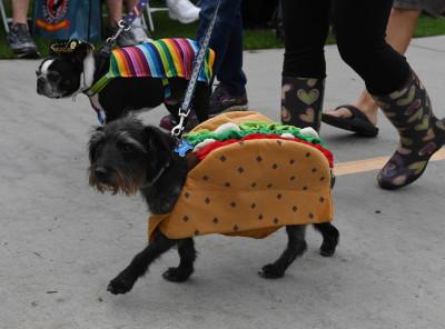 Haute Dog Howloween