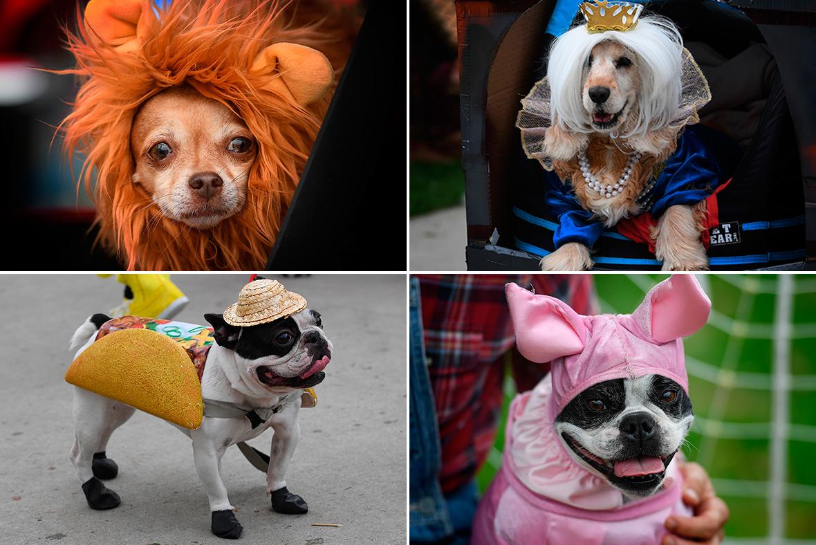 Haloween dogs