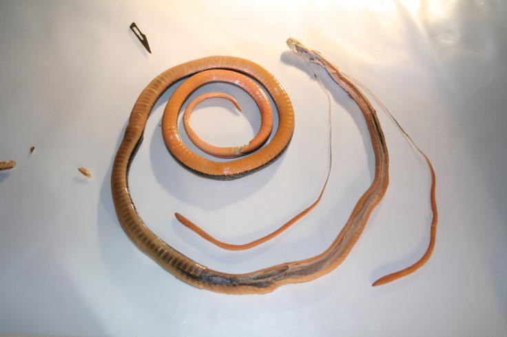 Snake glands