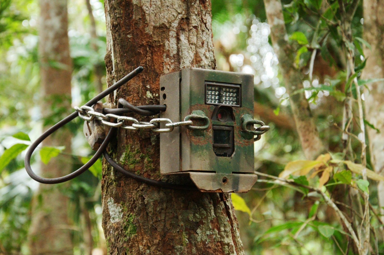 A camouflaged camera trap