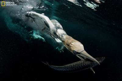 National Geographic Nature Photographer of the Year