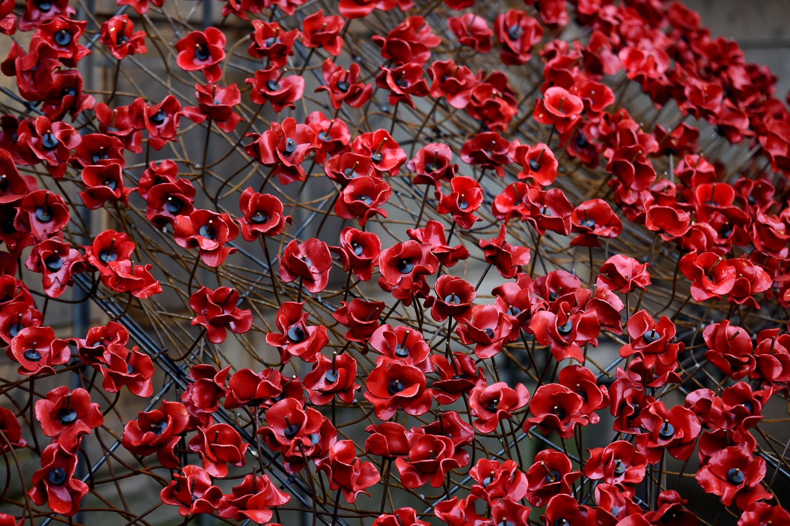 Its almost remembrance sunday again so people are arguing about its almost remembrance sunday again so people are arguing about wearing poppies on tv buycottarizona Images