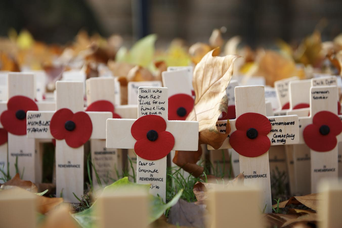 Remembrance Day Why I Stopped Wearing A Poppy