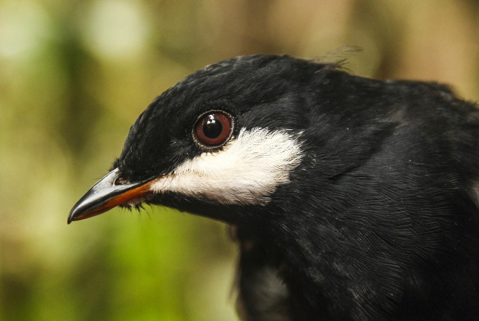 Habitat threatened