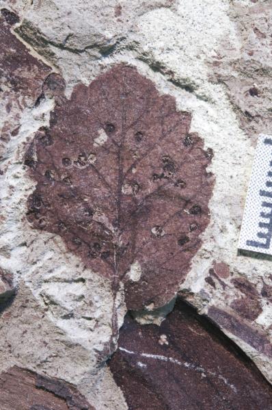 Patagonia mass extinction