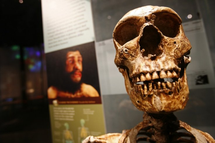 An exhibit is seen a the Bernard Spitzer Hall of Human Origins at the American Museum of Natural History in New York