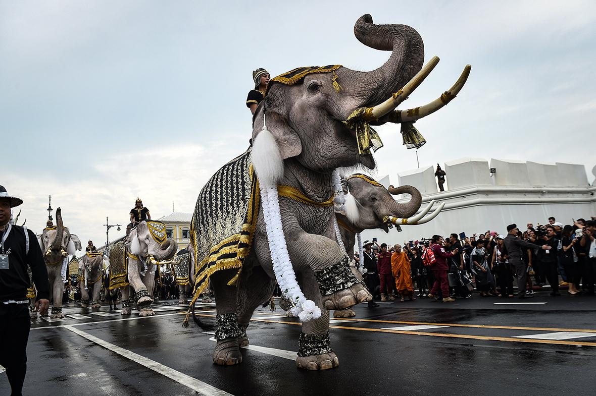 Thailand elephants