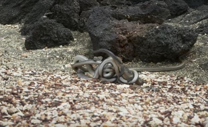 iguana vs snake