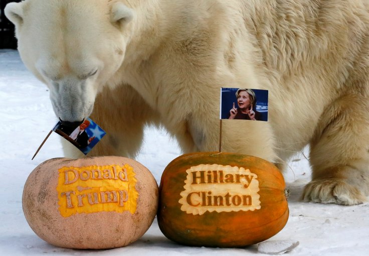 Animals pick US election winner