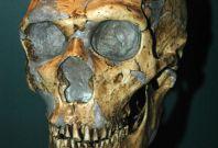 Neanderthal skeleton