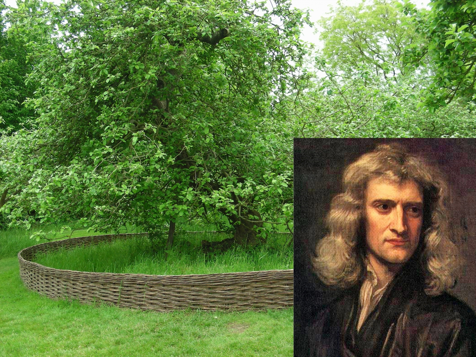 Isaac Newton apple tree