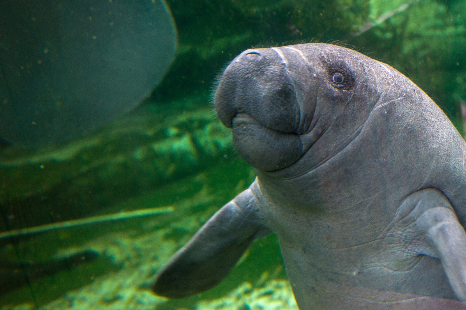 Google machine learning to save sea cows