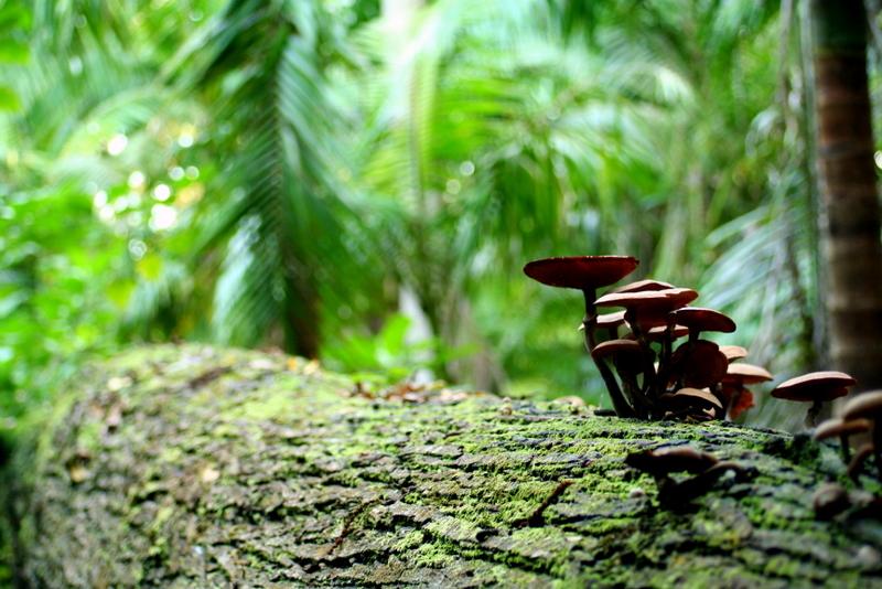 Jungle ecosystem