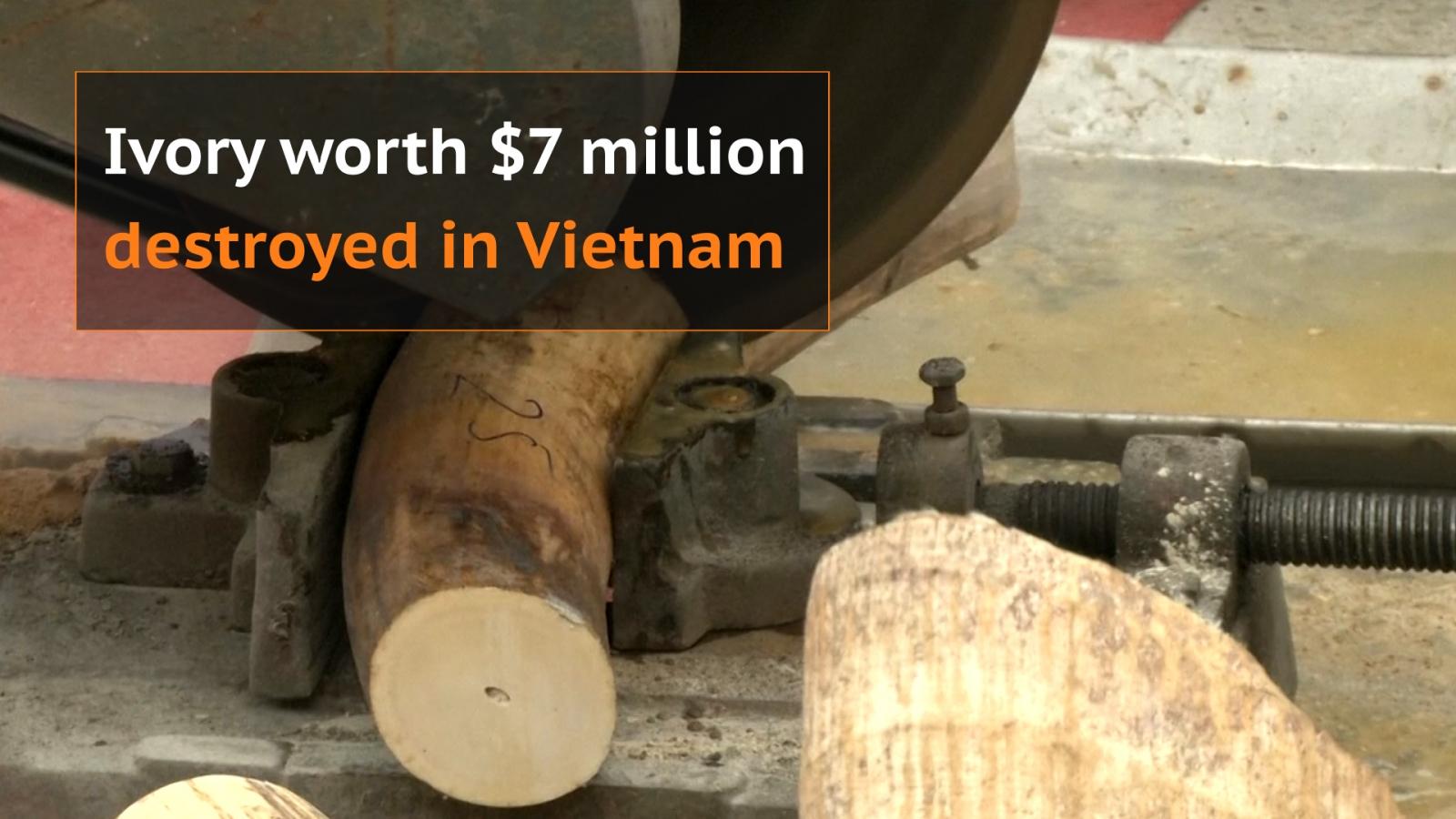 Vietnam destroys ivory worth $7 million