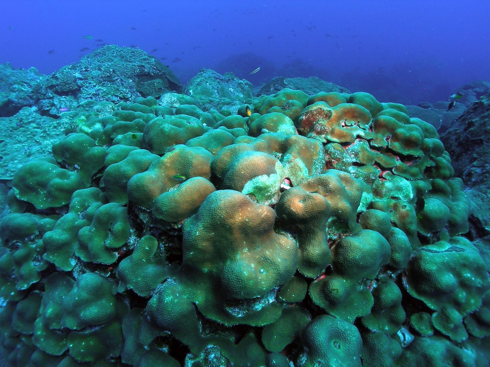 Coral history