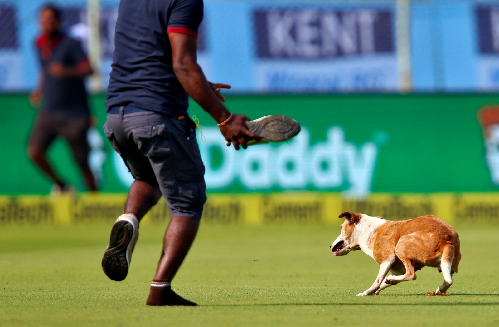 India vs England dog