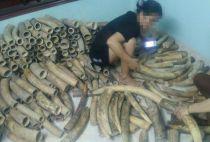 Elephant ivory for sale