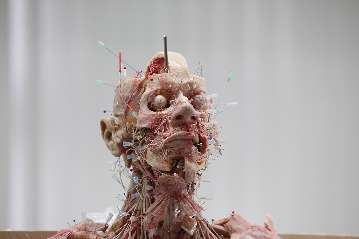 Body Worlds Gunther Von Hagens Plastination Of Human Bodies