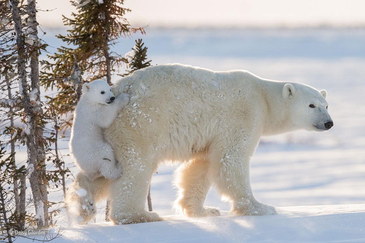 Wildlife Photographer of the Year 2016