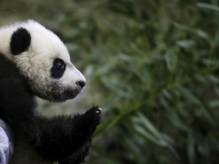 Bei Bei panda