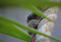 3 rare pygmy marmoset monkeys stolen from Sydney Park, say officials
