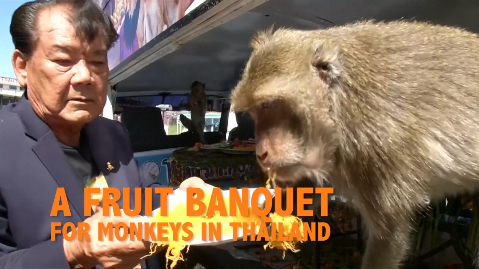 A fruit banquet for monkeys