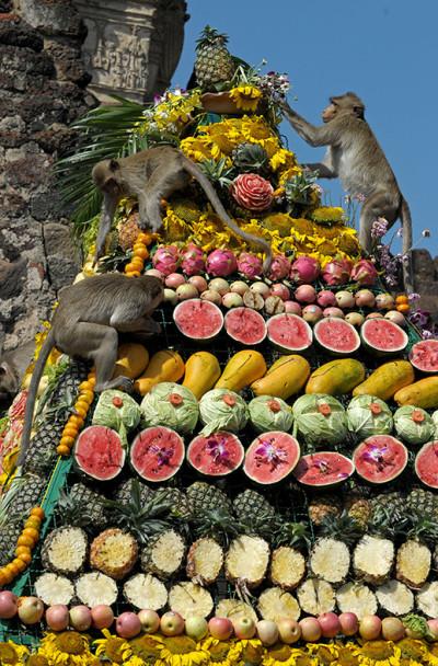 thailand monkey buffet
