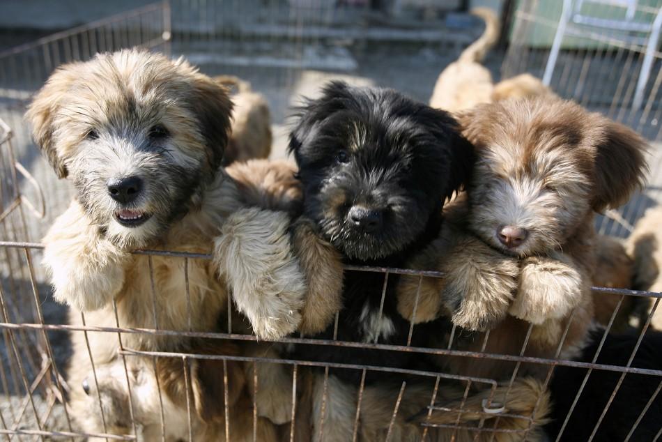 To match Reuters Life! KOREA DOG/SAVED