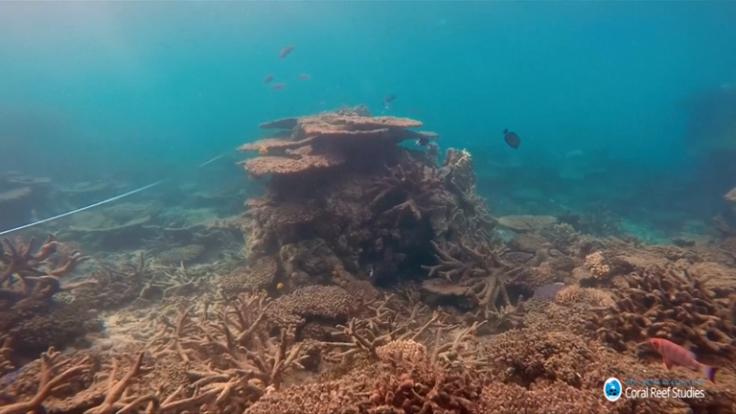 Global warming has caused biggest ever coral die-off on Australia's Great Barrier Reef