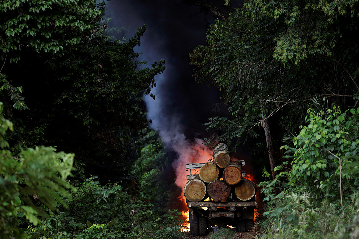 Amazon guardians rainforest deforestation