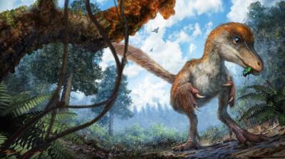 dinosaur tail feathers