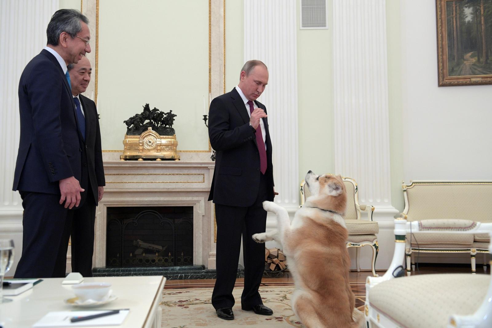 Vladimir Putin dog diplomacy, Yume