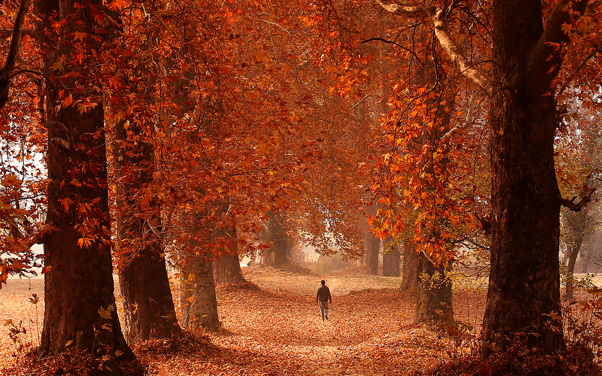 Srinagar Autumn