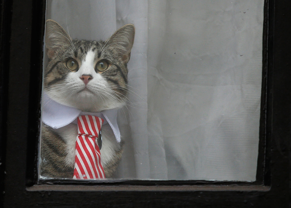 Cat and tie