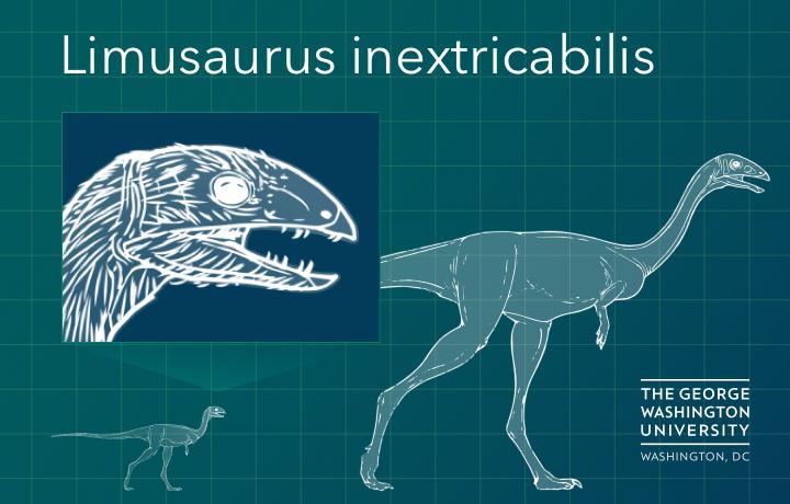 Dinosaur Lost Teeth in Adolescence