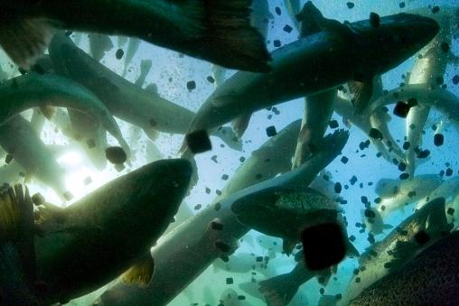 Aquaculture threat