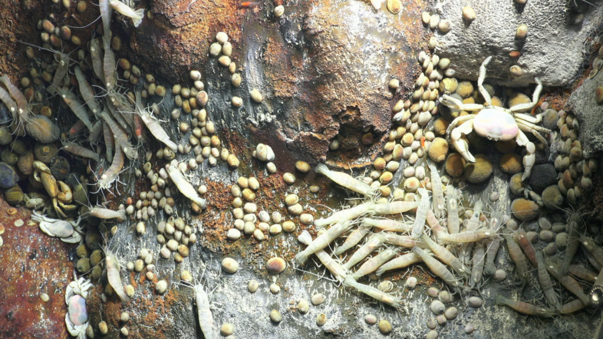 Hydrothermal residents