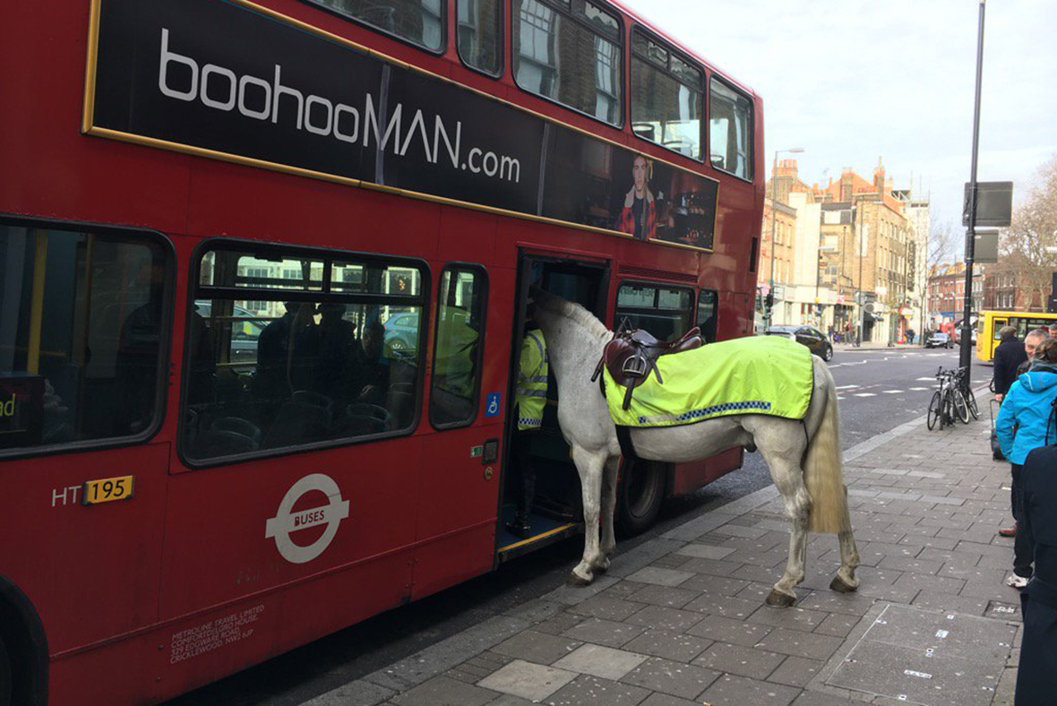 Police horse bus