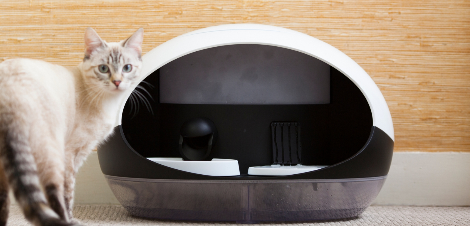 Catspad smart cat feeder