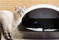Catspad smart cat feeder