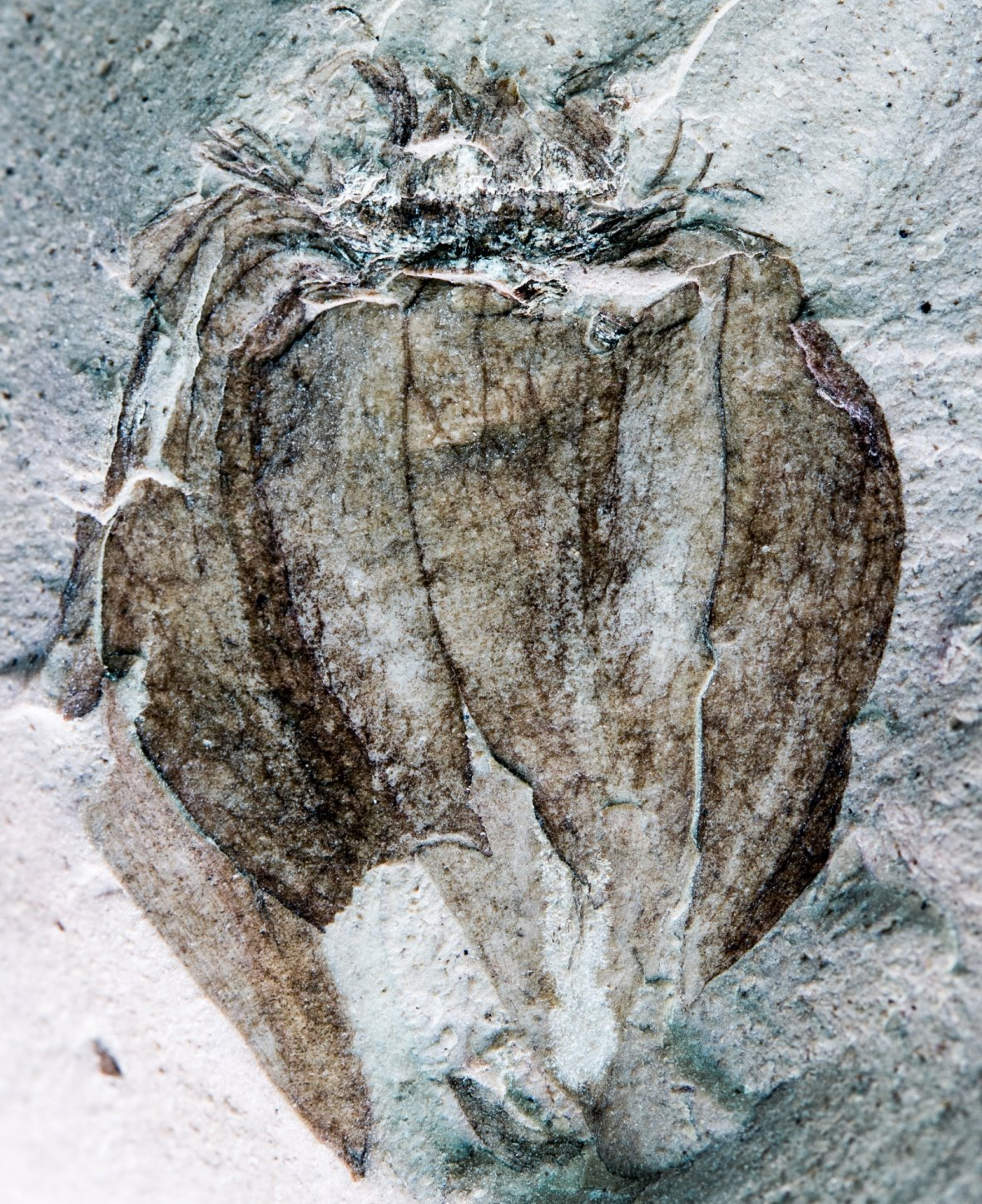 Fossil fruit