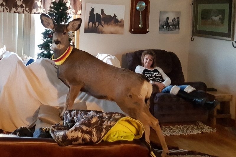 Mcgaughey deer